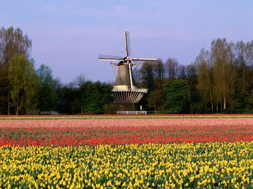 keukenhof_gardens_lisse_the_netherlands_wallpaper-normal